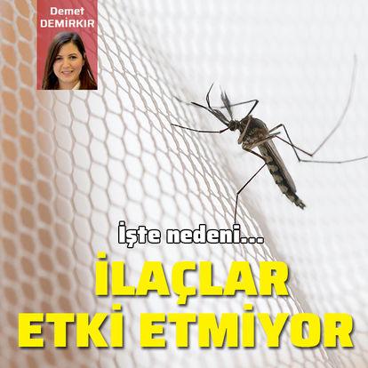 İlaçlar neden sivrisineklere etki etmiyor?