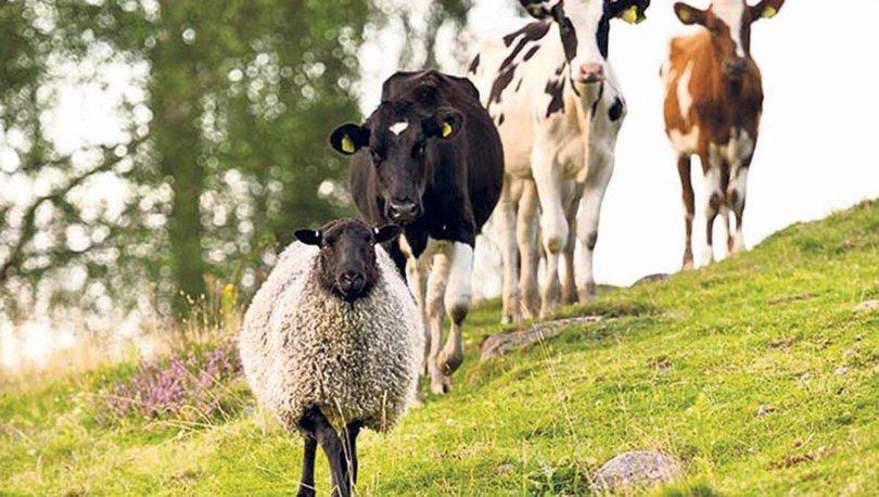 hayvancılık