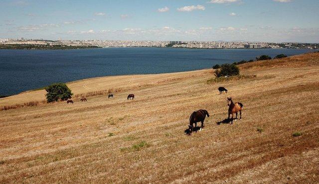 Adalar'da kaldırılan fayton atlarının son hali - Haberler
