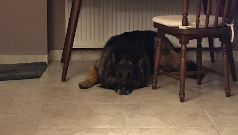 Köpeği silahla vurarak öldürdü!