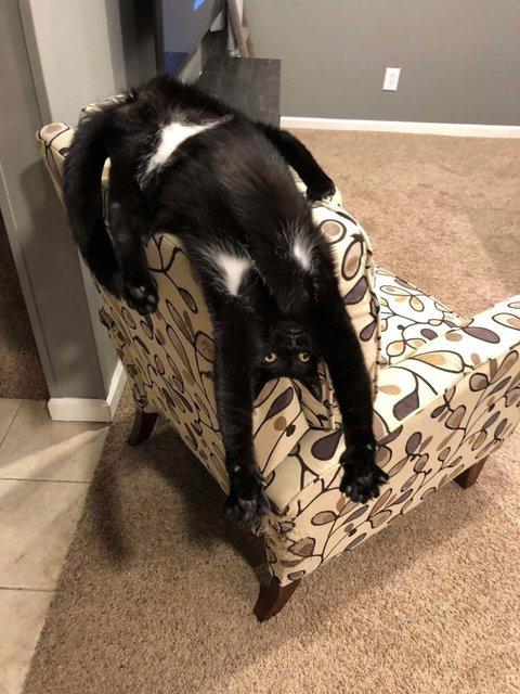 İnternette yeni akım: Kedinizin sorunu ne?