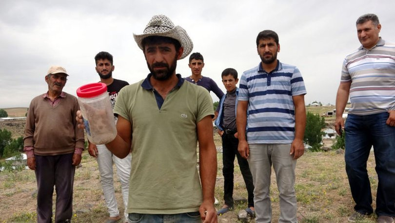 van erciş'de akrep istilası