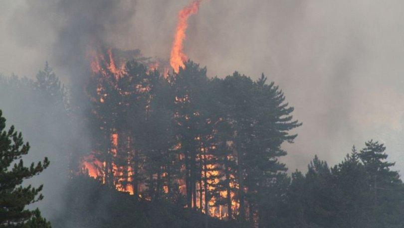 Türkiye genelinde çıkan 19 orman yangınının 15'i kontrol altına alındı