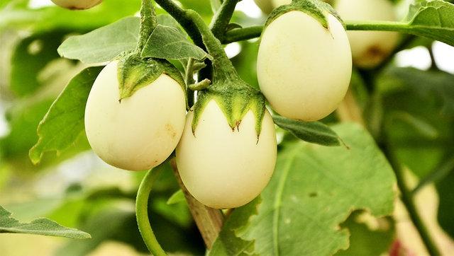 Yumurtaya benziyor ama... Ne olduğunu tahmin edebildiniz mi? - Haberler