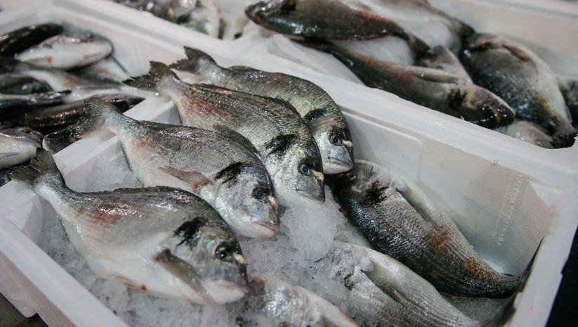 Balık türleri tescillendi