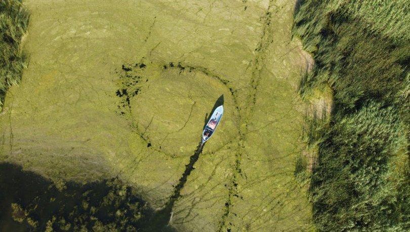 Beyşehir Gölü Milli Parkı'ndaki yeşil doku adeta büyülüyor