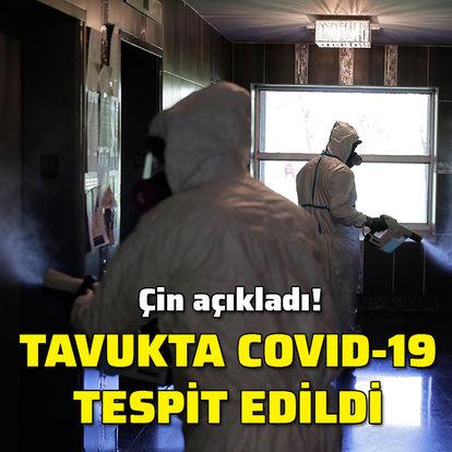 Tavukta Covid-19 tespit edildi!
