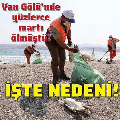 Van Gölü'ne martıların ölüm nedeni belli oldu!
