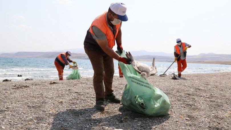 Van Gölü'nde martı ölümleri