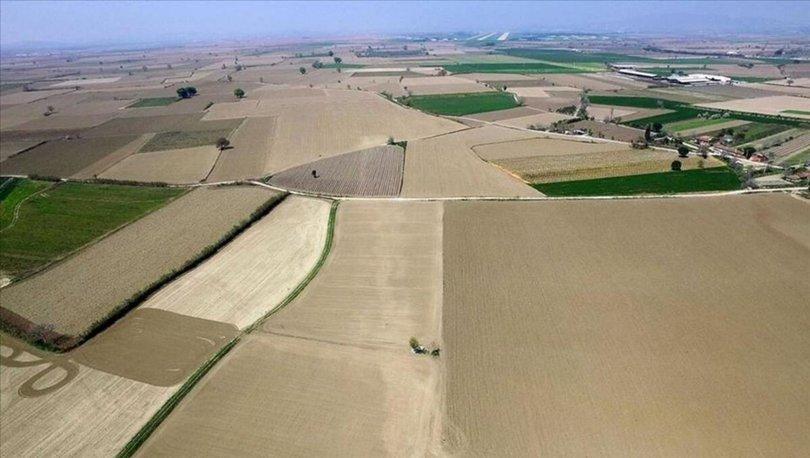 Tıbbi, aromatik ve süs bitkileri için 20,5 milyon metrekare Hazine arazisi kiraya verildi