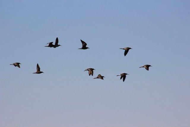 Suruç Ovası farklı kuş türlerine ev sahipliği yapıyor