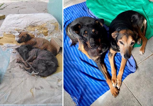 Ölüme terk edilen köpeklerin duygulandıran değişimleri...