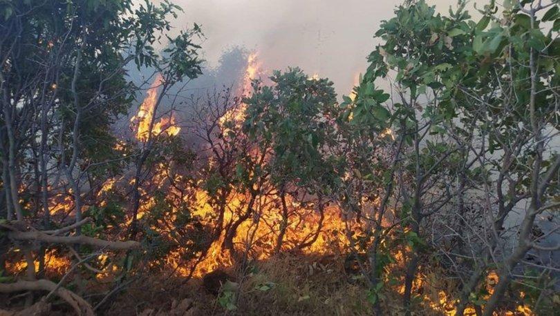 SON DAKİKA HABERİ! Elazığ'da orman yangını!