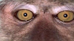 Ormanda kaybolan telefonundan maymun selfieleri ve videoları çıktı