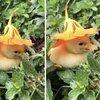 Kafasındaki çiçekle uyuyakaldı... Gören bayıldı!