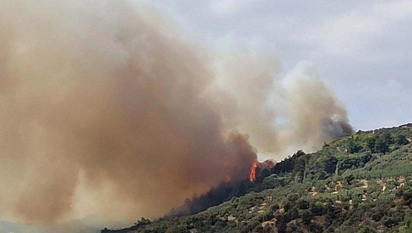 Son dakika haberi! Arıları tütsülerken ormanı yaktı!