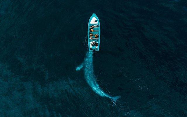 2020'nin en iyi drone fotoğrafları - Haberler