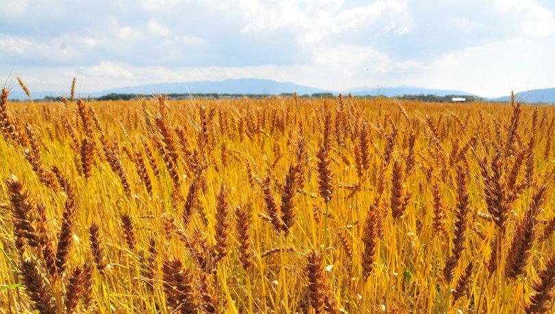 TMO'nun tarımsal ürün ithalatına ilişkin esaslar belirlendi