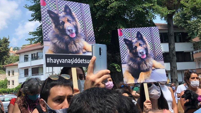 Habertürk'e konuşan hukukçular hemfikir: Hayvan haklarında yeni bir düzenleme şart