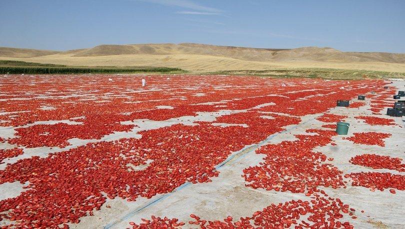 Diyarbakır'ın kurutulmuş domatesleri İtalya'ya ihraç ediliyor