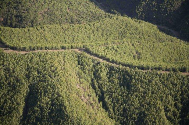 Mersin'de bazı alanlar orman sınırları dışına çıkarıldı