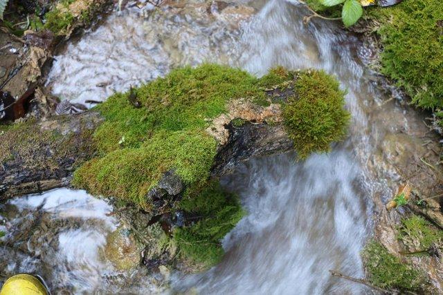 Sülüklü Göl Tabiat Parkı'nda sonbaharın güzellikleri yaşanıyor