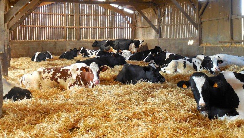 Hayvancılık yatırımlarına yüzde 100'e kadar hibe desteği