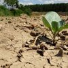 91 yılın en kurağı! O bölgede çiftçi endişeli