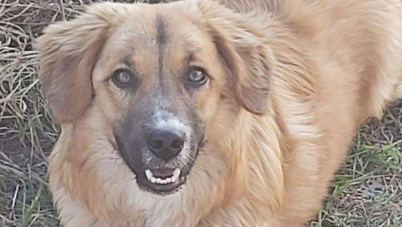 SON DAKİKA DEHŞET! Yavru köpeği öldürdü! Böyle neden olamaz! - Haberler