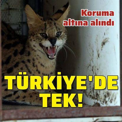 Türkiye'de tek! Koruma altında