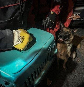 Uyuşturucu tespiti başta olmak üzere bomba tespiti, kaçakçılık, koruma ve devriye hizmeti, iz takibi görevlerinin yanısıra arama kurtarma çalışmalarında da büyük yararlılıklar gösteren polis köpeği ya da diğer adıyla K-9 köpeği İzmir depreminin ardından arama kurtarma ekiplerinin işini kolaylaştırıyor. Bayraklı