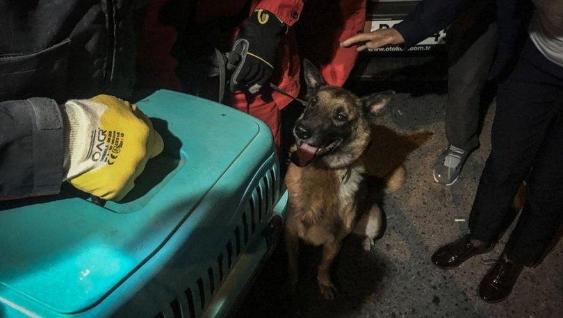 İzmir depremi ardından kurtarma çalışmalarında kullanılan K-9 köpeği bu kez kediyi kurardı
