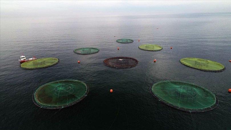 Su ürünlerinde 2 milyar dolarlık ihracat hedefi için yeni yetiştiricilik alanları belirlendi