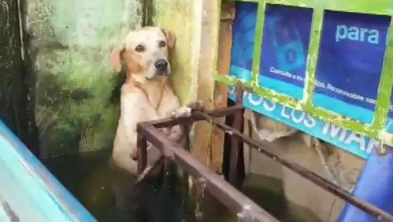 Selden kurtarılan köpek viral oldu