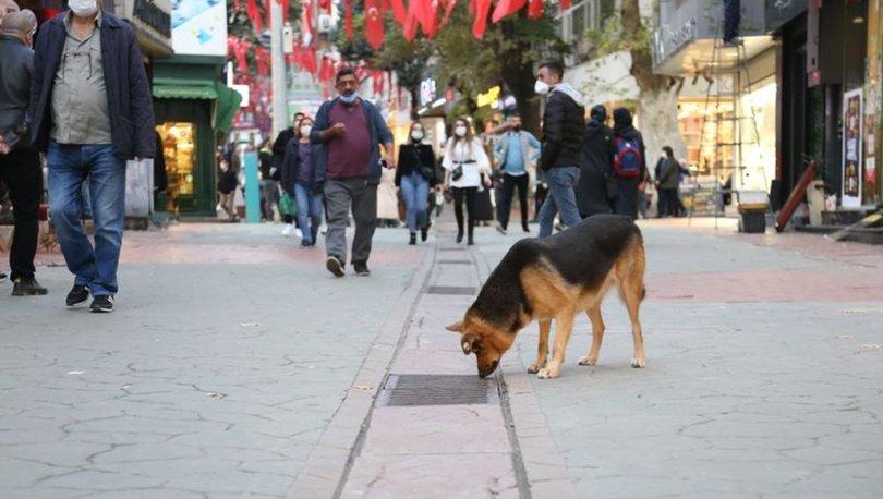 Son dakika: Mazgalı izleyen köpeğin sırrı çözüldü! Haberler
