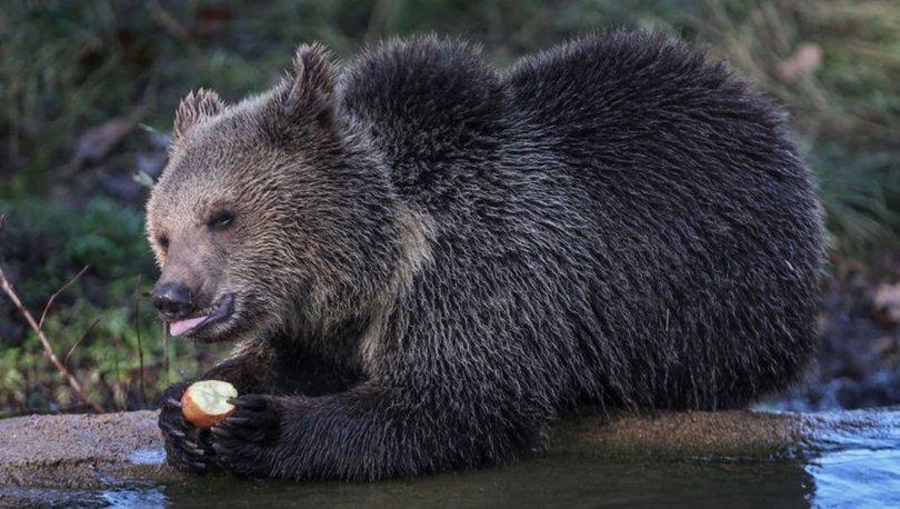 Yavru boz ayılar Ovakorusu'nun maskotu oldu