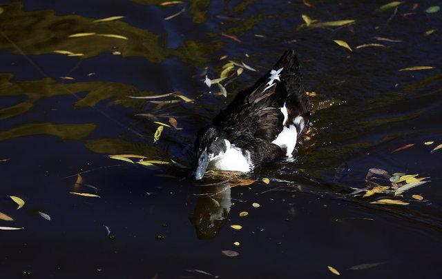 Bozkırın ortasındaki 'Balıklı Göl'de hazan güzelliği cezbediyor