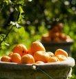 Ege Yaş Meyve Sebze İhracatçıları Birliği Başkanı Hayrettin Uçak, Türkiye