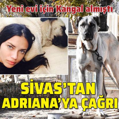 Evi için Kangal almıştı... Sivas'tan Adriana'ya çağrı