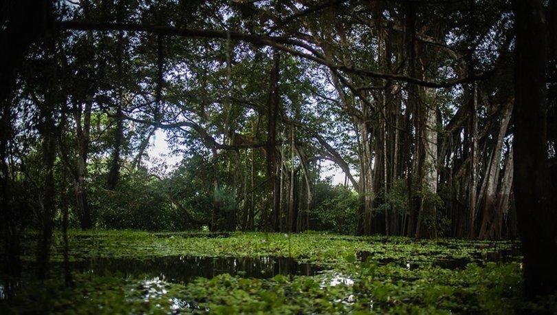 Amazon ormanlarındaki kayıp 'son 12 yılın en yüksek seviyesine' çıktı