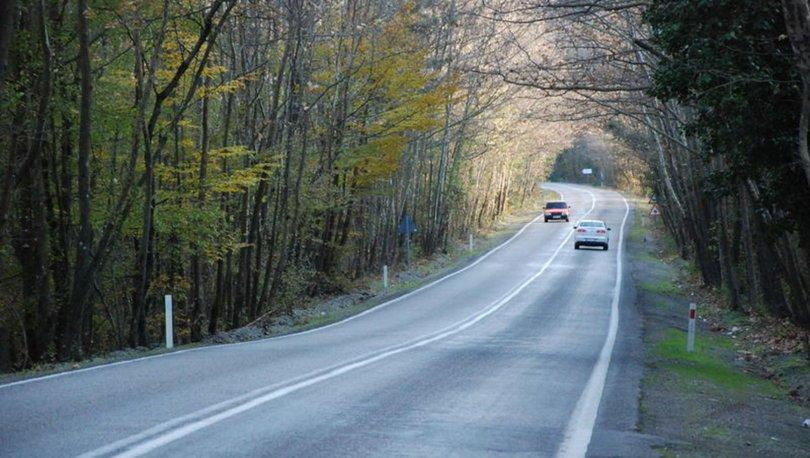 Ağaçların tünel oluşturduğu yolda görsel şölen