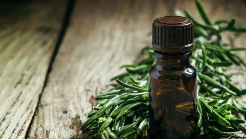 Çay ağacı yağı nedir? Çay ağacı yağının faydaları nelerdir? hbrt