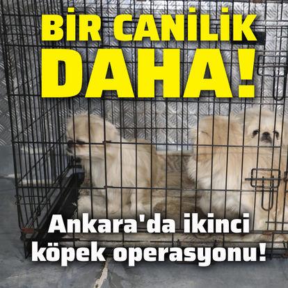 Ankara'da ikinci köpek operasyonu!