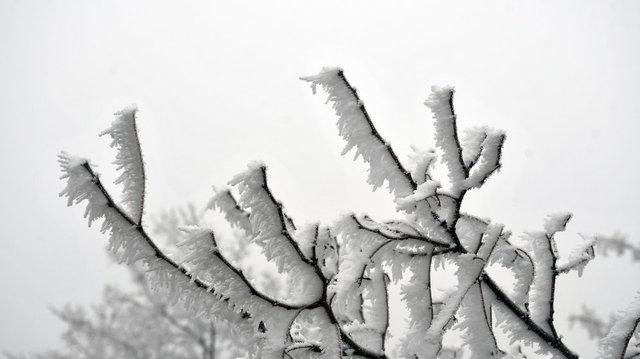 Sivasta kırağı tutan bitkiler ve sis görsel şölen sundu