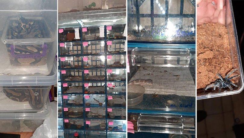 Piton ve tarantula beslenen eve baskın