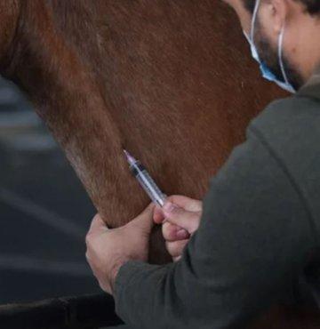 """Arjantin Ulusal İlaç, Gıda ve Sağlık Teknoloji İdaresi (ANMAT), atların ürettiği antikorlara dayanan ve yeni tip koronavirüs (Kovid-19) tedavisinde etkili olduğu belirtilen """"hiperimmün at serumu""""nun Kovid-19"""