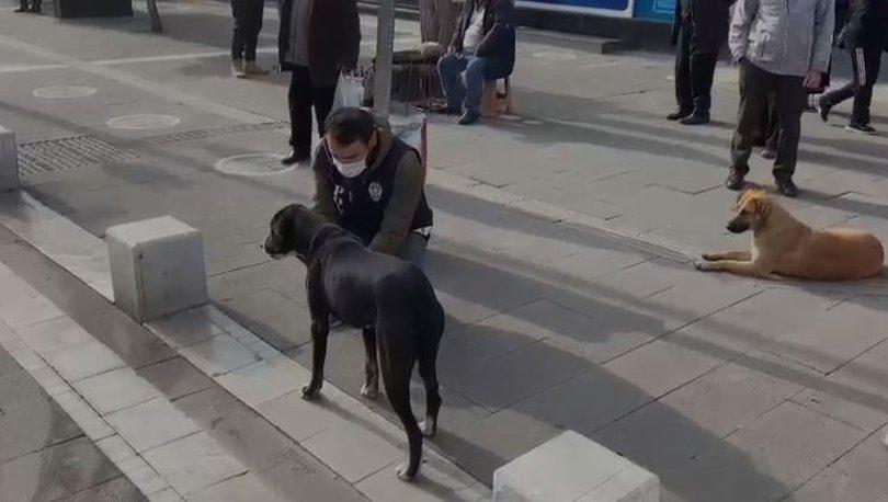 POLİSTEN FARKINDALIK! Son dakika... Uşak polisinden sokak hayvanları için anlamlı hareket!