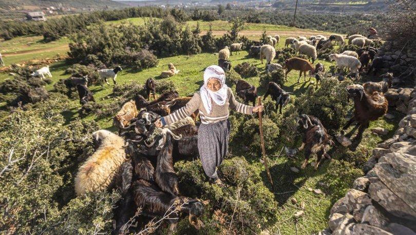 Fatma teyze Amanos Dağları eteklerinde yarım asırdır çobanlık yapıyor