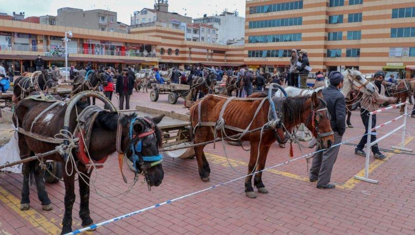 Keşan'da yeni dönem! Son dakika: Atlar artık özgür