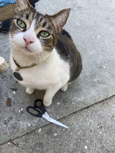 Hırsız kedi komşuların kabusu oldu...